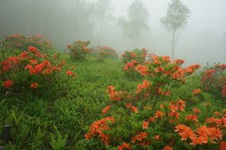 霧の入笠山 (1280x853) (640x427).jpg